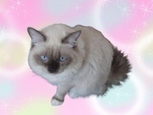 子猫のホロン