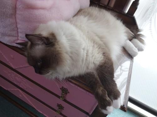 横たわる樽 あるいは猫